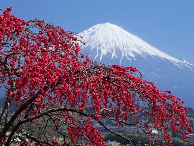 Tips Wisata Murah dan Hemat Liburan ke Jepang