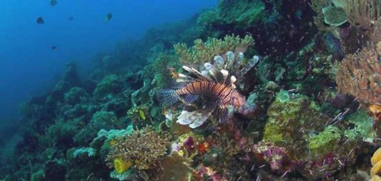 Objek Wisata di Wakatobi Sulawesi Tenggara
