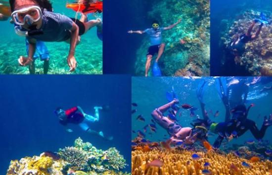 Keindahan Bawah Laut di Pulau Menjangan Bali
