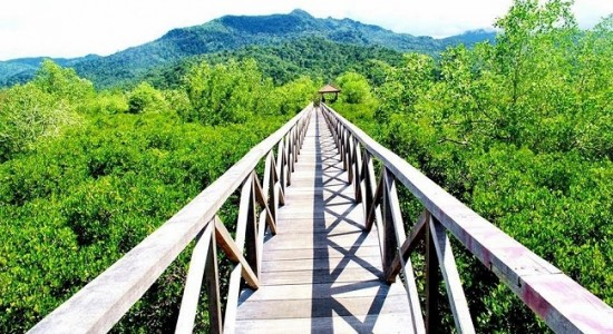 Hutan Mangrove Pancer Cengkrong Trenggalek