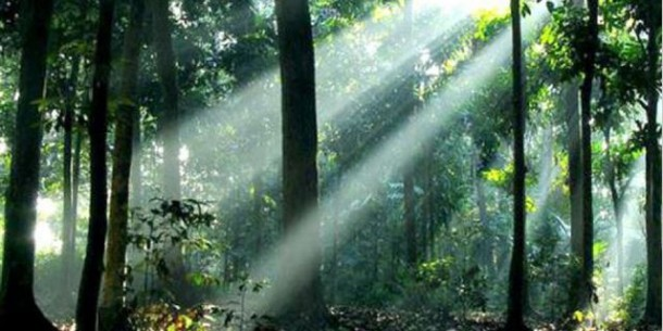 Hutan Depok di Universitas Indonesia