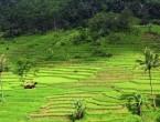 Foto Desa Wangunharja Subang