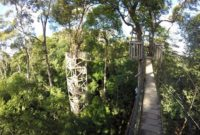 Menikmati Keindahan Kawasan Wisata Bukit Bangkirai-canopy bridge