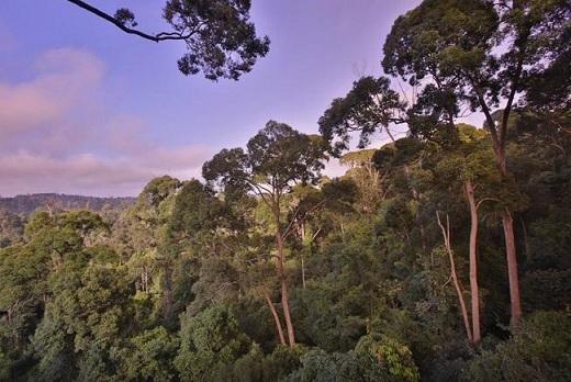 Menikmati Keindahan Kawasan Wisata Bukit Bangkirai-kawasan hutan