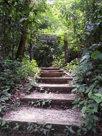 Menikmati Keindahan Kawasan Wisata Bukit Bangkirai-salah satu jalur trekking