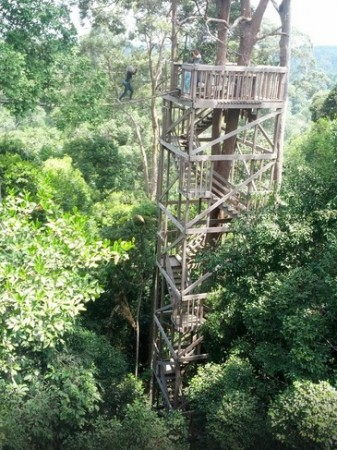 Menikmati Keindahan Kawasan Wisata Bukit Bangkirai-tangga yang harus lewati sebelum meniti jembatan
