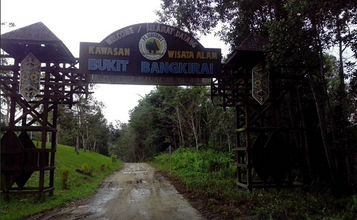 Menikmati Keindahan Kawasan Wisata Bukit Bangkirai