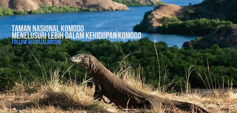 Pulau Komodo Keajaiban Dunia