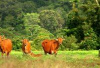 Tempat Favorit Liburan Lebaran Taman Nasional Meru Betiri, Jember Banyuwangi Jawa Timur