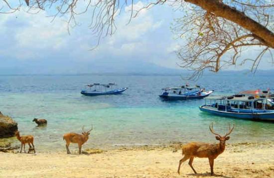 Objek Wisata Pulau Menjangan Bali