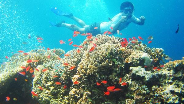Pesona Bawah Laut Pulau Menjangan Bali