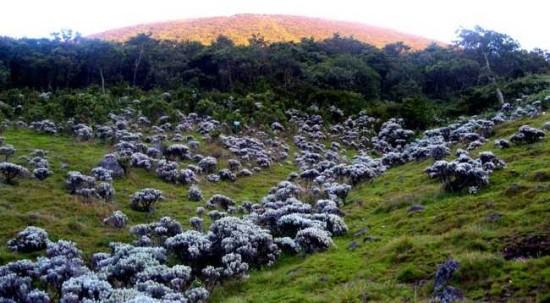 Foto Alun-alun Surya Kencana Gunung Gede
