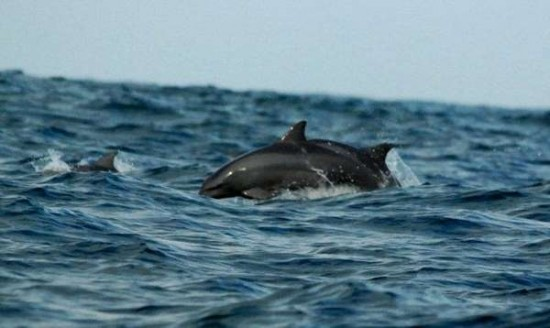 Tempat Wisata Teluk Kiluan Melihat Lumba-Lumba