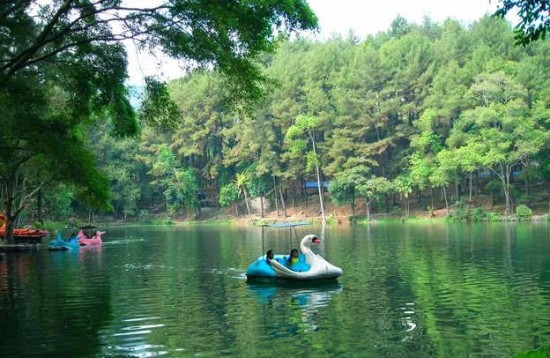 Lokasi Objek Wisata Wanawisata Ciwaringin Cirebon
