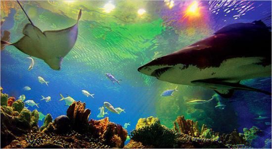 Lokasi Aquaria KLCC Malaysia